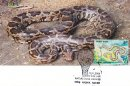 Nature India - Snakes - Design-1