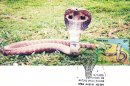 Nature India - Snakes - Design-3