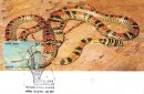 Nature India - Snakes - Design-4